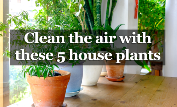 5 Houseplants That Produce Oxygen And Are Impossible To Kill
