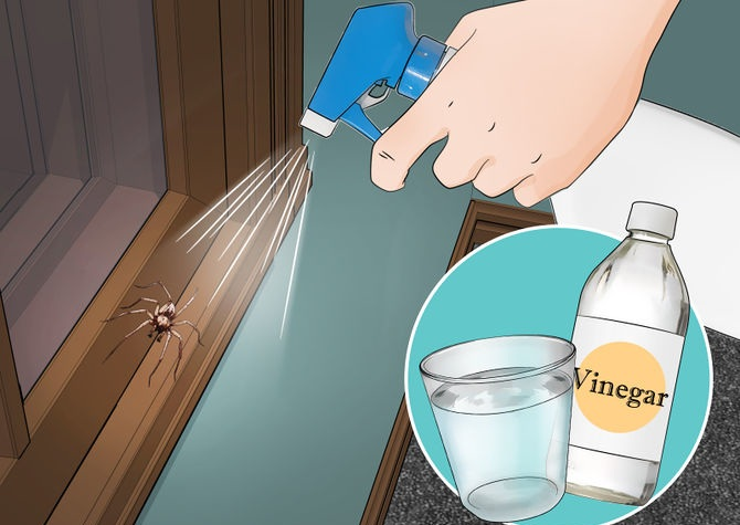 If You Do These 6 Things, You'll Never See Another Spider in Your Kitchen, Bathroom or Bedroom Again