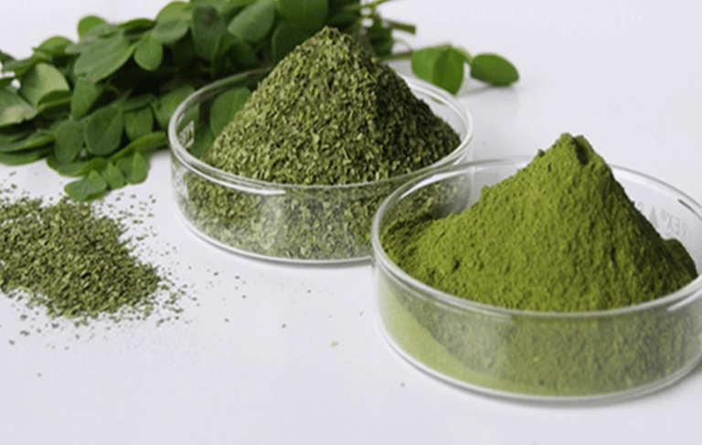 moringa-the-herb-that-kills-cancer-and-stops-diabetes